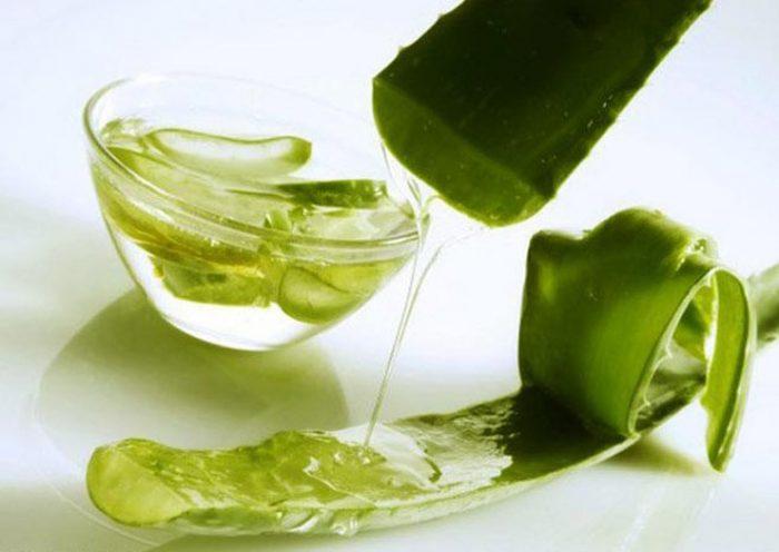 Сок алоэ хорошо заживляет анальные трещины и снимает воспаление