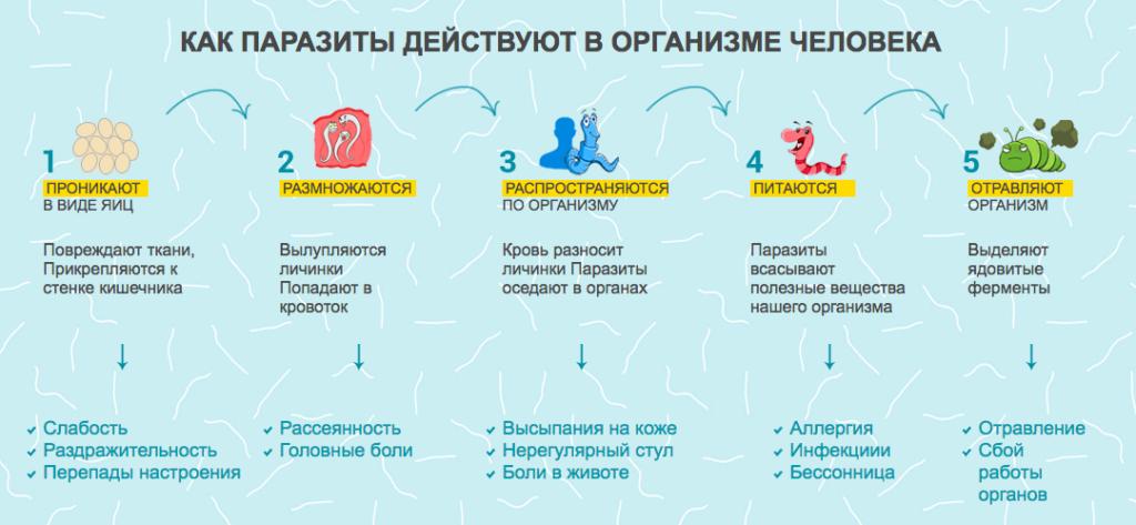 Гельмифаг от паразитов: инструкция по применению, цена и отзывы
