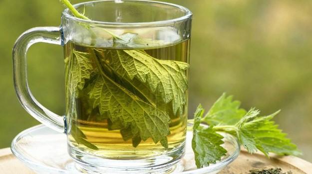Лечение геморроя крапивой — рецепты настоев и отваров