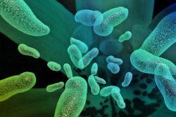 Субатрофический гастрит: что это, лечение, симптомы и виды