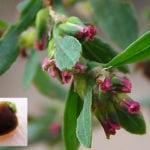 Травы при геморрое: лечение отварами лечебных сборов
