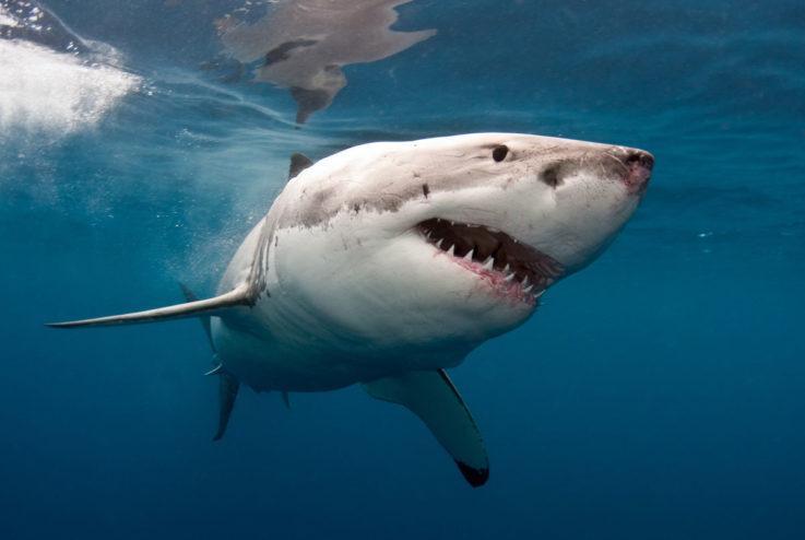 3 варианта свечей и мазей от геморроя с акульим жиром