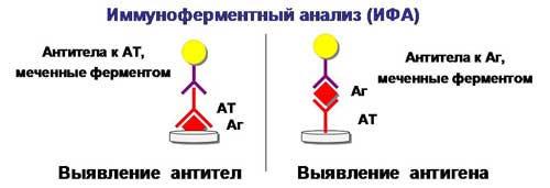 Анализ крови на хеликобактер пилори: расшифровка результатов, нормы у взрослых и детей, подготовка и сдача крови