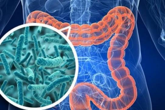 Анализ на дисбактериоз кишечника — что показывает?