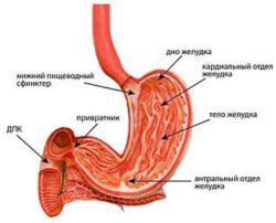 Антральный гастрит: что это, симптомы и лечение, народные средства, диета
