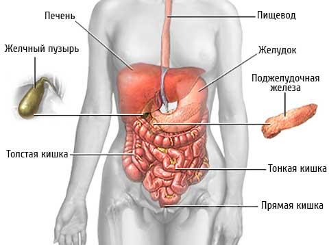 Болит желудок после еды: возможные причины и их лечение