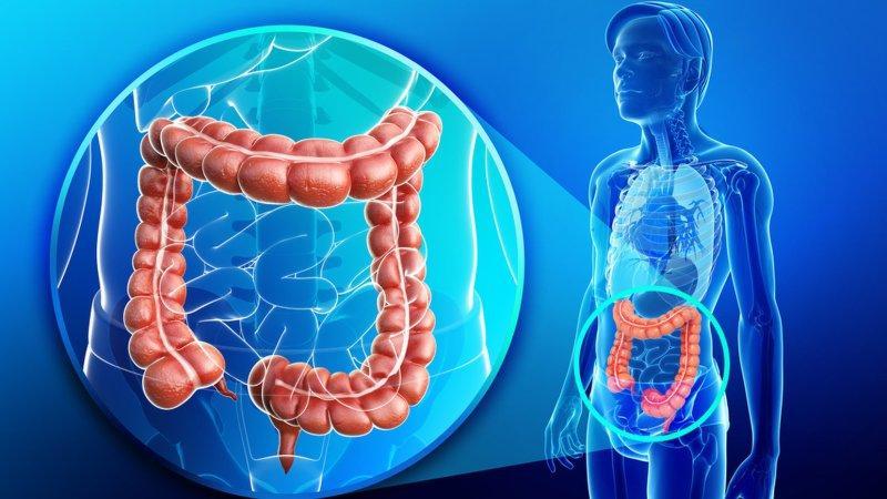 Что  такое толстая кишка, ее строение и основные заболевания