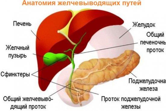 Дискинезия желчного пузыря и желчевыводящих путей