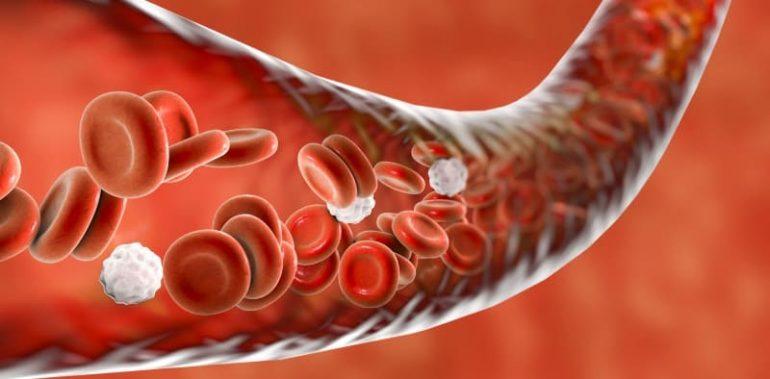 Как лечить геморрой пиявками? 4 полезных эффекта от процедуры, показания, противопоказания и отзывы пациентов