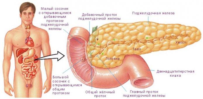Как подготовиться к УЗИ поджелудочной железы