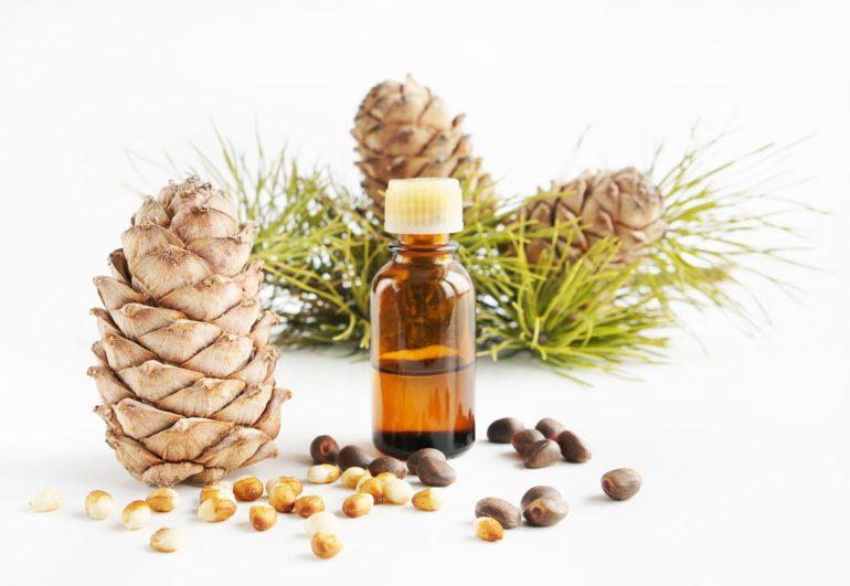 Как правильно применять кедровое масло при геморрое? 4 способа лечения внутреннего и наружного геморроя