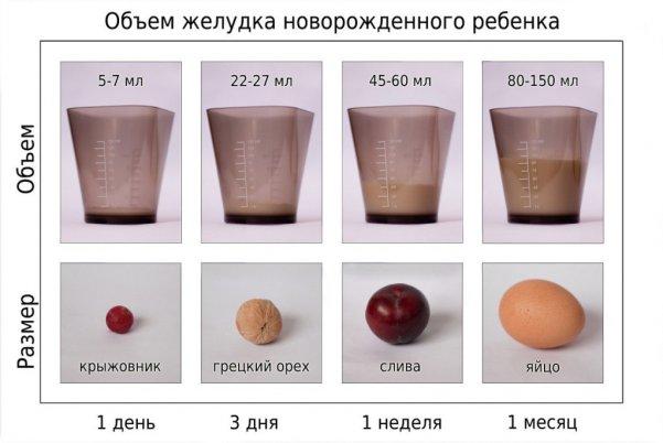 Размеры желудка у взрослых и новорожденных