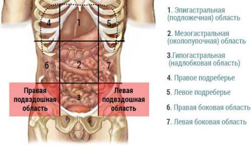С какой стороны находится аппендикс у человека и как болит при аппендиците