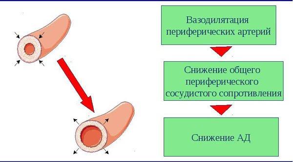 Сосудорасширяющие препараты при гипертонии: список гипотензивных таблеток