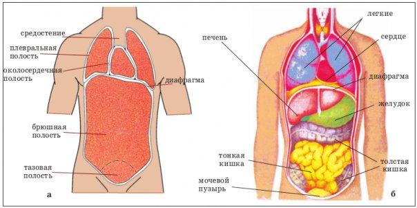 Стадии и прогноз при раке брюшной полости