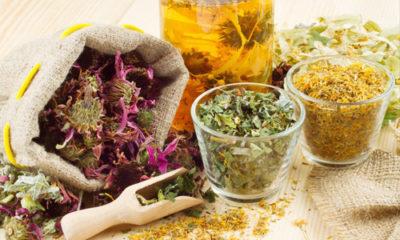 Травы от поноса у взрослых и детей: какие травы пить, способы приготовления и применения