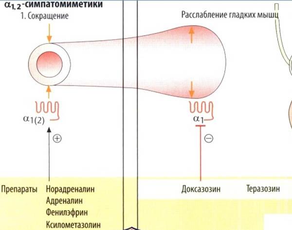Выбираем капли от глазного давления: 6 средств для снижения внутриглазного давления