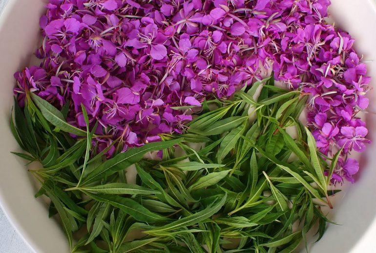 Зеленый чай при геморрое: вред или польза? 5 видов чая полезных при геморрое