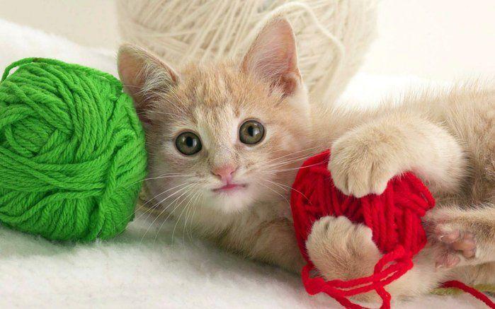 Что делать если у кошки запор — выясняем причины и подбираем способ лечения