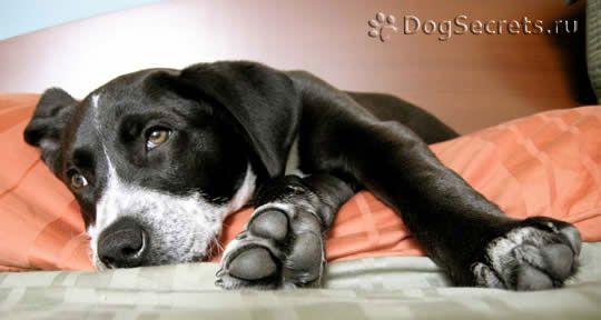 Что делать если у собаки запор – способы лечения