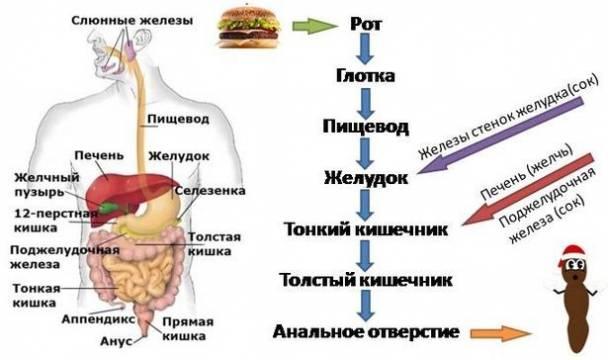 Гипотоническая и гипертоническая дискинезия желудка