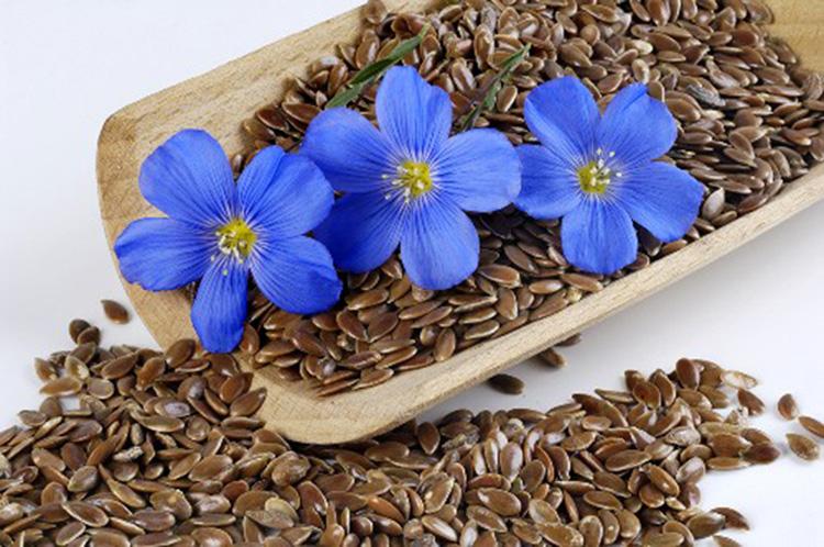 Как принимать семена льна для очистки кишечника?