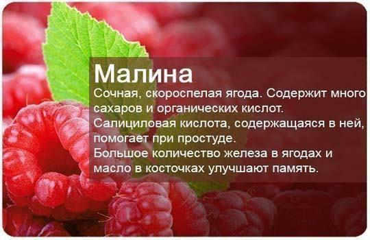 Какие ягоды можно есть при запоре?