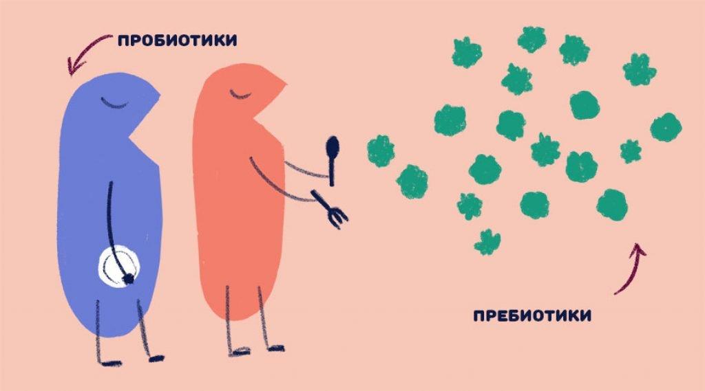Лекарства от дисбактериоза кишечника у взрослых. Список эффективных пребиотиков