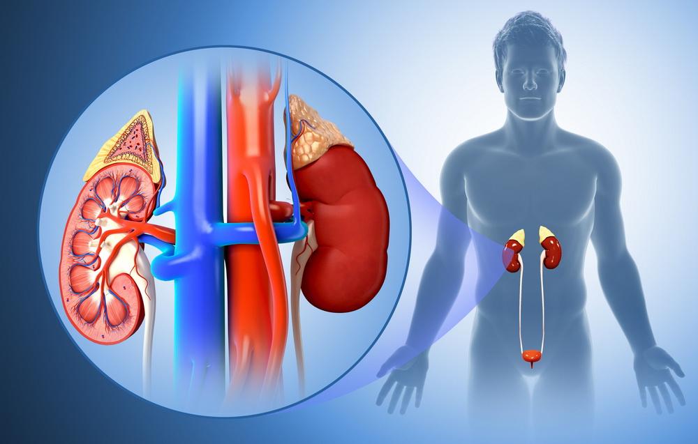 Размер предстательной железы: норма, методы определения объема органа, возможные патологии