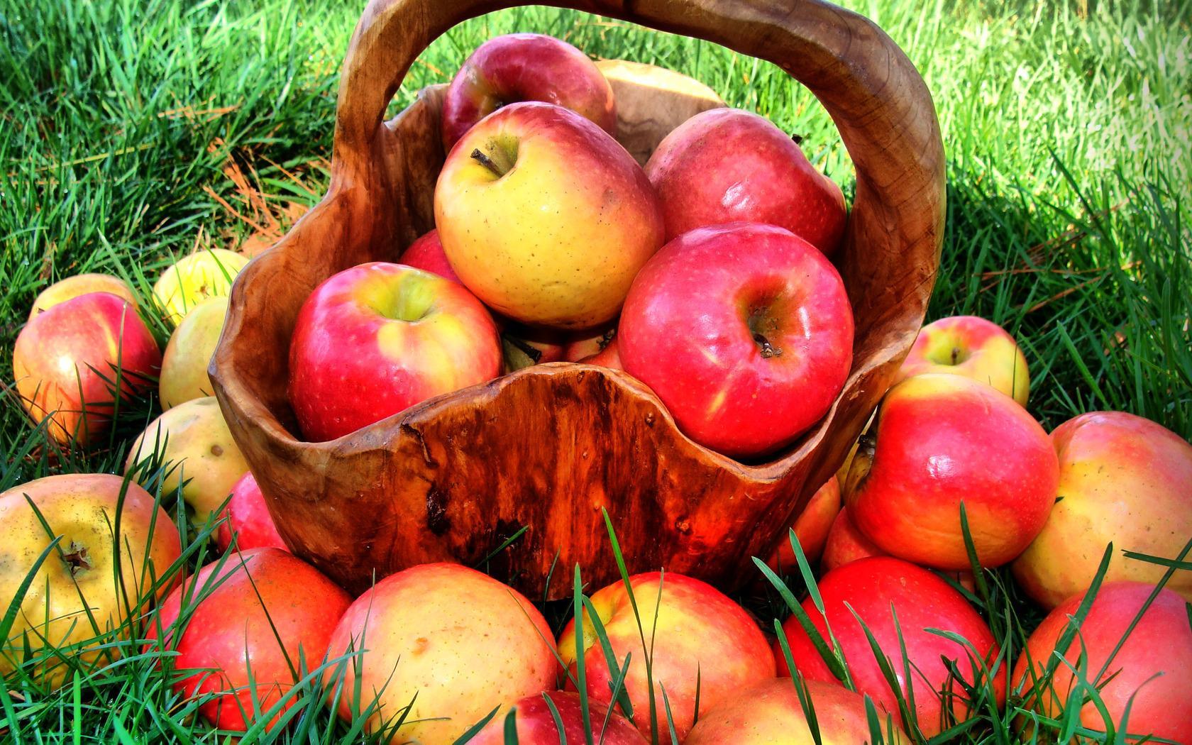Яблоки помогут стать долгожителем