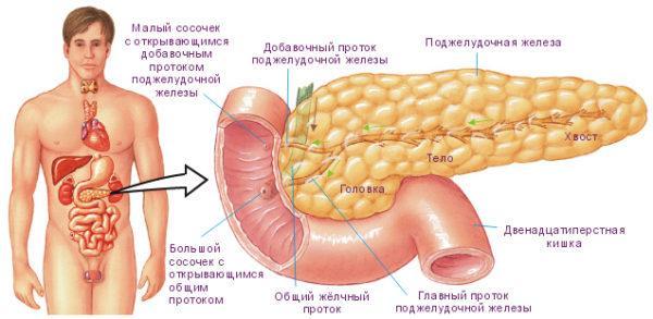 Боль в поджелудочной железе — чем снять боль?