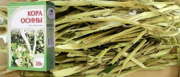 Осиновая кора: лечение простатита