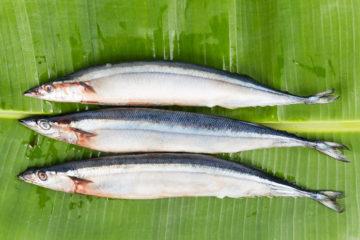 Рыба при панкреатите: какую можно, правила приготовления и употребления