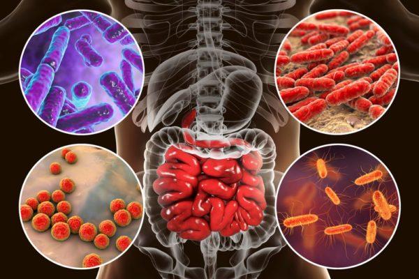 Как восстановить микрофлору кишечника после антибиотиков?
