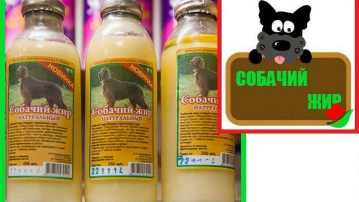 Собачий жир от геморроя: польза средства, эффективные рецепты