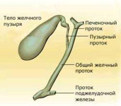 Утолщение стенок желчного пузыря (уплотнение): причины, какая норма и как лечить