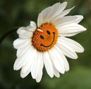 ромашка с улыбкой, улыбайтесь и мир станет лучше