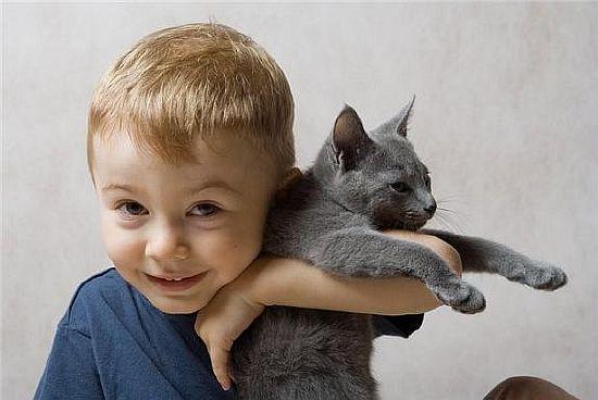 дружба с котом ребенка, воздействие кошек на детей