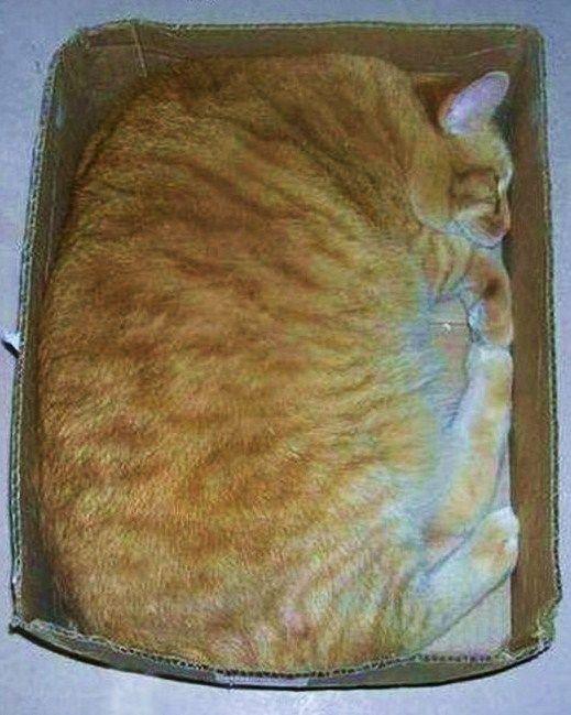 """квадрат ( толстый кот в коробке) элемент психологического теста """"геометрические фигуры"""""""