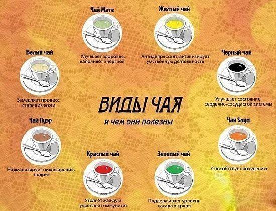 виды чая и полезные свойства разных видов чая