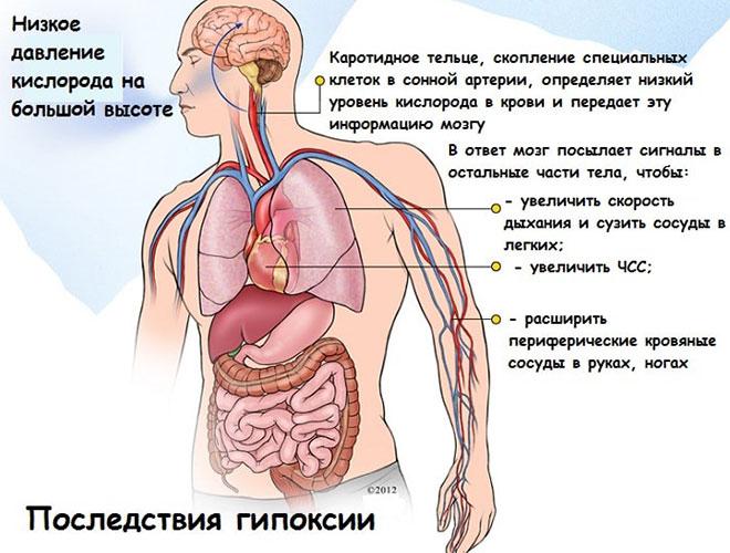 Как повысить кислотность желудка: лечение в домашних условиях