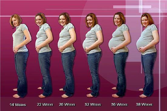 изменение живота при беременности