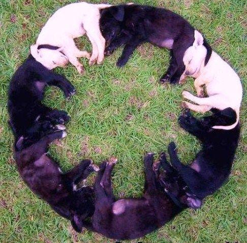 """круг из собак, элемент психологического теста """"геометрические фигуры"""""""