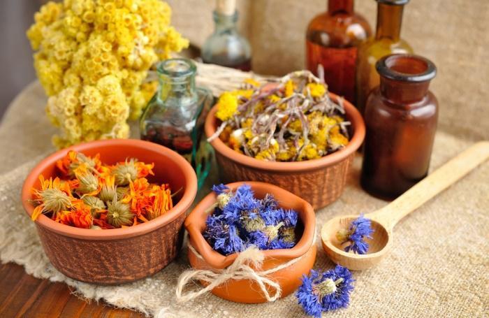 Фото: цветы календулы и другие растения