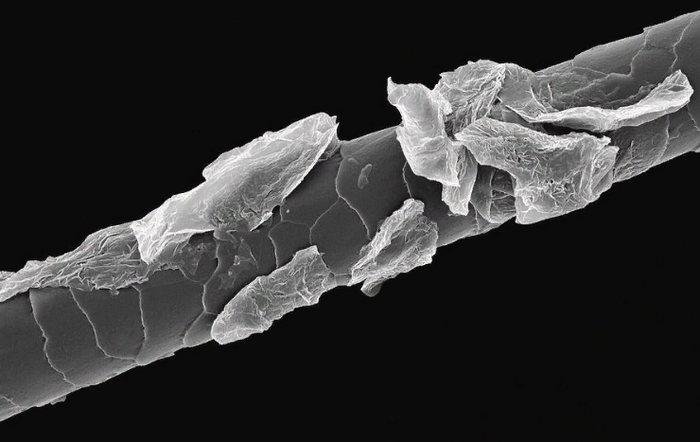 Срез волоса под микроскопом