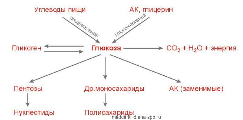Схема метаболизма глюкозы