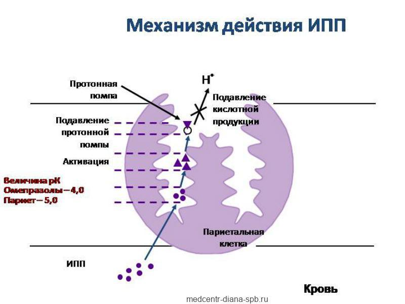 Механизм действия ингибиторов протонной помпы