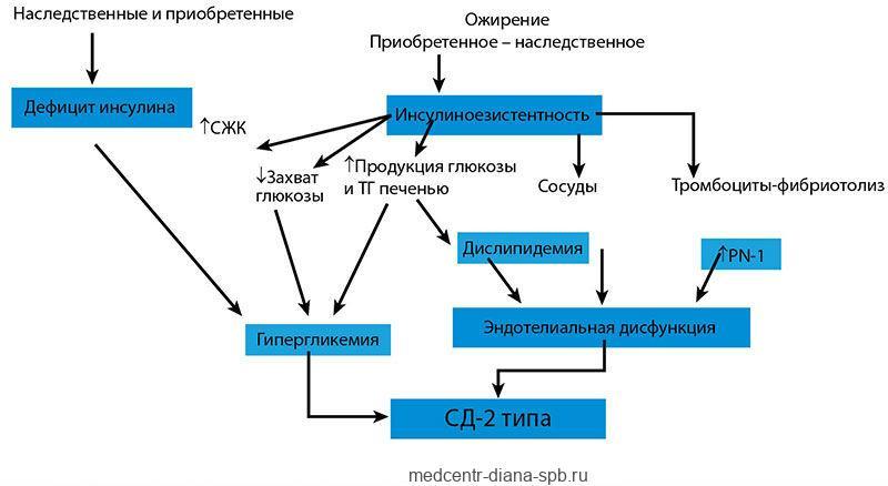 Патогенез диабета 2-го типа