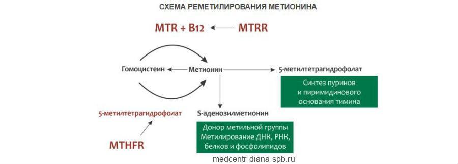 Схема реметилирования метионина