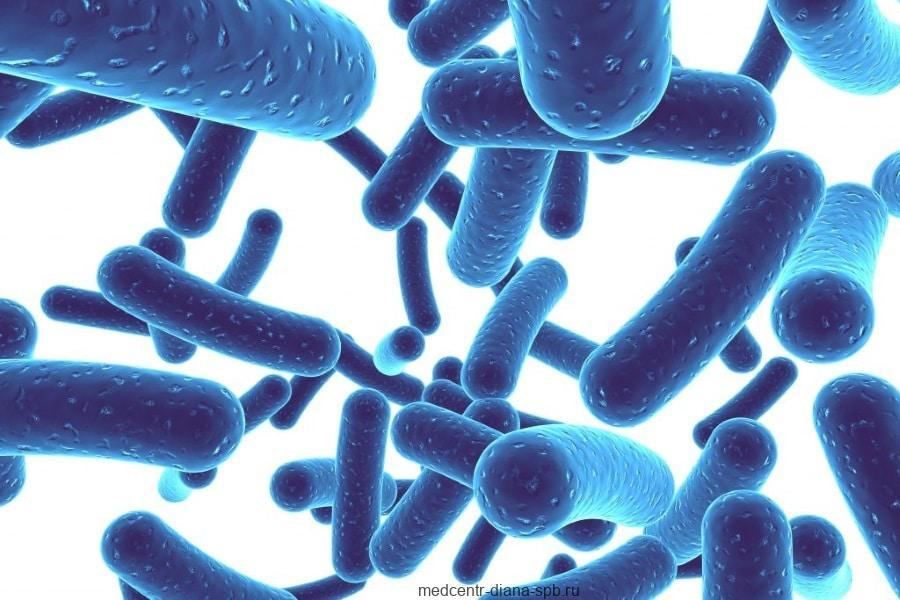 Палочки Lactobacillus